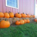 BlakesCiderMill15Pumpkins