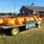 BlakesCiderMill17Pumpkins